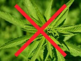 Объявление о выявлении и уничтожении наркосодержащих растений